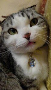 Image 0ee5bec 169x300 - 猫3種ワクチン