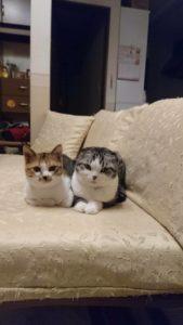 Image 9aba502 169x300 - 【猫ちゃん専門】ペットシッター
