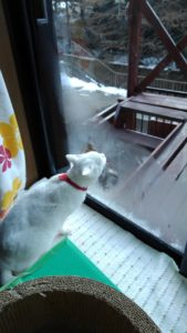 Image 9bd7ca5 1 169x300 - 48年振りの最強寒波の朝、窓の結露を舐めてお手伝い⁉️