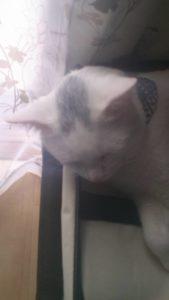 S 7541777032029 169x300 - 相模原の便利屋さん猫の手の猫たち~その3