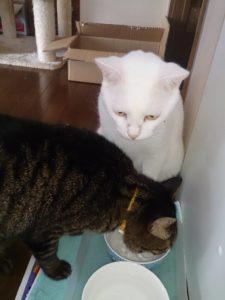 S 7541780056057 225x300 - 相模原の便利屋さん猫の手の猫たち~その3