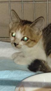 S 7542008456032 169x300 - 相模原の便利屋さん猫の手の猫たち~その4