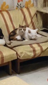 S 7542012403485 169x300 - 相模原の便利屋さん猫の手の猫たち~その4