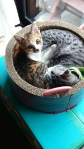 S 7542012595999 169x300 - 相模原の便利屋さん猫の手の猫たち~その4