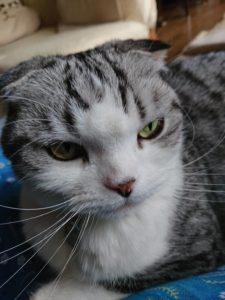 S 7911068940189 225x300 - 猫3種ワクチン