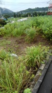 S 8162290590149 169x300 - 戸塚区と寸沢嵐で草刈り