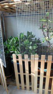 2855 169x300 - 植木の冬支度と三毛猫椅子