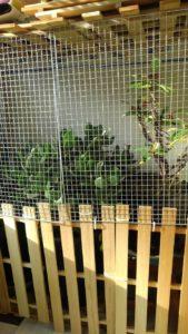 2856 169x300 - 植木の冬支度と三毛猫椅子