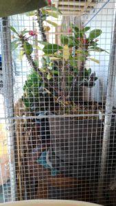 2857 169x300 - 植木の冬支度と三毛猫椅子