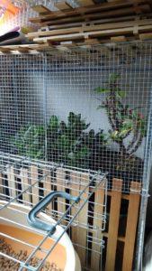 2859 169x300 - 植木の冬支度と三毛猫椅子