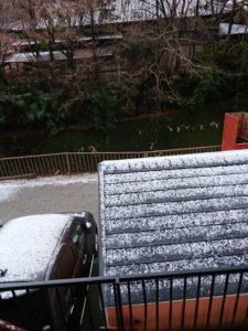 8352 225x300 - 雪と温泉と猫