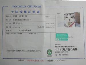 9017 300x225 - 猫3種ワクチン