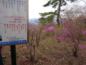 9057 300x225 - 中野山春のふれあいウォーキング