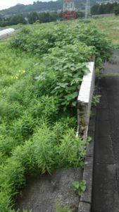 R2.7.12 169x300 - 寸沢嵐の草刈り