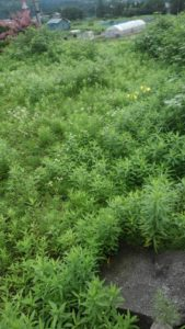 R2.7.12 6 169x300 - 寸沢嵐の草刈り