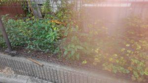 7484 300x169 - 板橋区志村で草刈り?草むしり