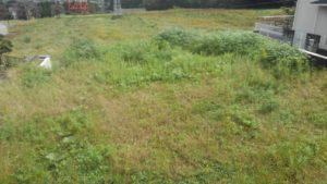7518 300x169 - 板橋と寸沢嵐で草刈り&ツノナス