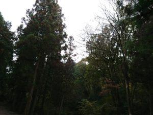 16572 300x225 - 大沢広場の整備