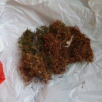 16698 200x200 - 藤野町で鳥の巣除去