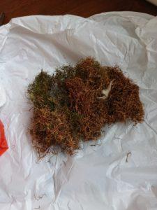 16698 225x300 - 藤野町で鳥の巣除去