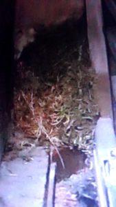 7654 169x300 - 藤野町で鳥の巣除去