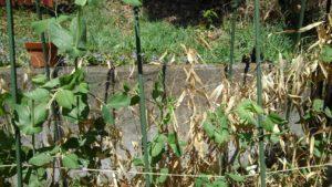 8308 300x169 - ライン通信障害と植物