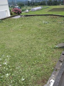 R3.7.13 3 225x300 - 寸沢嵐で草刈り
